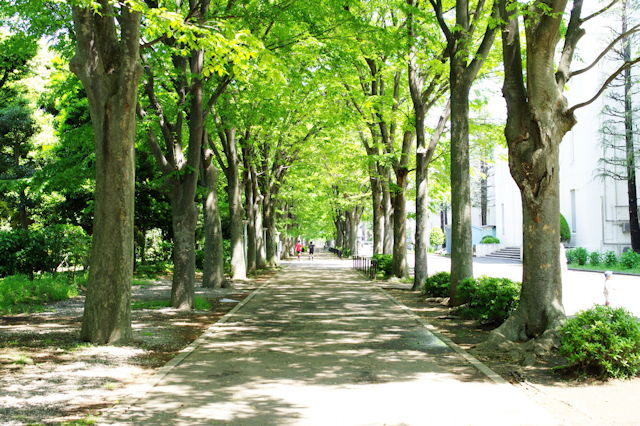 Street lined with trees at Hiyoshi campus